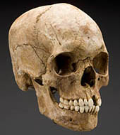 We couldn't get a photo of Powell's actual skull so just imagine this one with reeeeeally bad teeth. (Source: Smithsonian's Written in Bone exhibit)